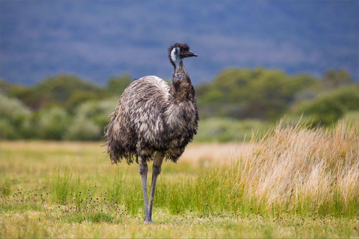 разноцветный страус картинка все, равно, это